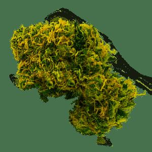 Lemon Lime Marijuana Strain