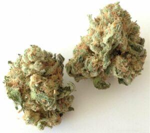 Chronic Widow Marijuana Strain