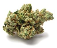 SFV OG Marijuana Strain
