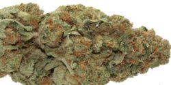 Sherbert Marijuana Strain