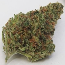 Citral Glue Strain
