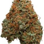 northern hashplant marijuana strain
